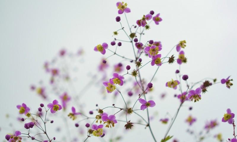 flower-870557_1280