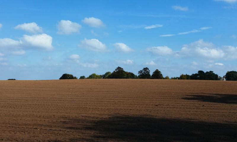 field-2.jpg