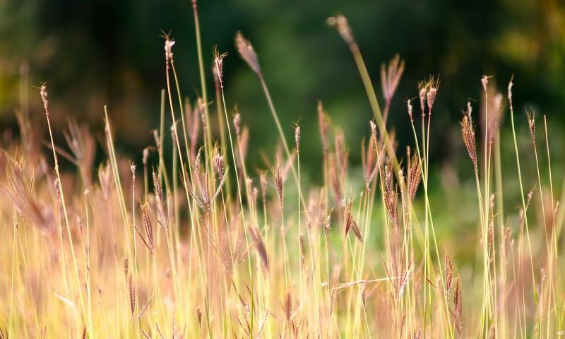 grass-498205_1280