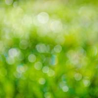 green-315275_1280.jpg