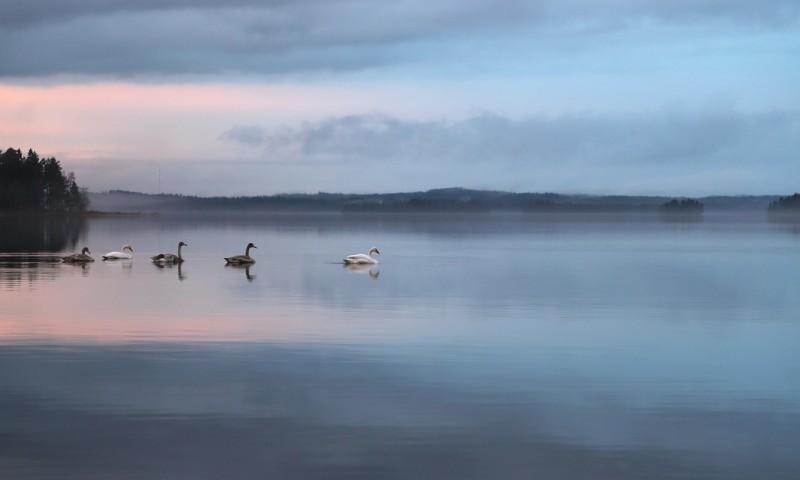 swan-398663_1280